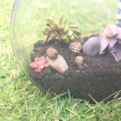 How to Make a Snail Terrarium