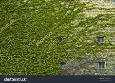 overgrown wall - Google Search