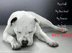 This reminds me of my friend pittie so much this baby is beautiful My pitbull. My best friend. My family. My life.