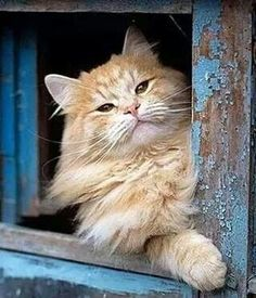 Country Cat ❤. Orange cat on the farm. Cats and Kittens > https://www.pinterest.com/trevorellestad/all-the-cats/