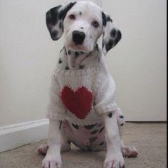 I heart dalmations :-)