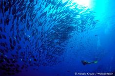 Diving PNG   Community Post: One Million Reasons Why Papua New Guinea Should Be On Your Bucket List