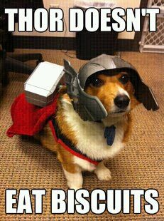 whatever puppy deemed worthy to fetch mjolnir shall hold the power of thorgi