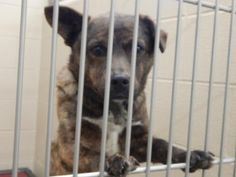 Meet+Traveller,+a+Petfinder+adoptable+Feist+Dog+|+Pikeville,+KY+|+Thank+you+for+taking+the+time+to+view+a+pet+from+the+Pike+County+Animal+Shelter!++If+you+are...