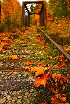 Fall in train bridge, Vancouver Island, British Columbia, Canada Fall Pictures, Pretty Pictures, Beautiful World, Beautiful Places, Beautiful Scenery, Autumn Scenes, Seasons Of The Year, All Nature, Train Tracks
