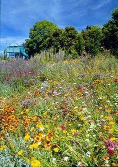 A field of wildflowers is perhaps the epitome of a natural garden. They can be overpowering next to the house, but if you have a large estate, a difficult-to-landscape hillside or simply a large empty lot in your sight line, consider sprinkling some seeds and seeing what comes up.  Tip: When planting a large number of perennials, annuals or bulbs, scatter the seeds in drifts to mimic how they grow in nature.