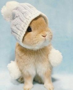 Puppies and kittens aren't the only cute animals in nature. Why would humans find baby animals cute to look at, Cute Baby Bunnies, Baby Animals Super Cute, Cute Little Animals, Cute Funny Animals, Cute Babies, Cute Pets, Bunny Bunny, Cutest Bunnies, Pet Bunny Rabbits