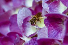 insectos y flores, combinación perfecta para la vida