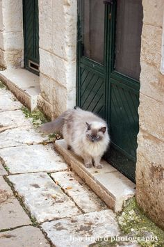 A cat in Ostuni, Italy. (c) Lisa Linard Photography.