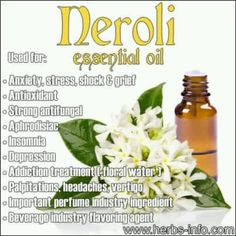 The oil of Neroli is produced from the fragrant white blossoms of the bitter orange tree. Bitter orange is an evergreen citrus tree native to Asia. Neroli was named in 1680 when the princess of Nerole