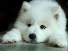 Little and cute :)
