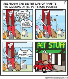 Sammy offers some sympathy …The next few weeks will chronicle an all-too-familiar story regarding pet store rabbits. (To buy, or not to buy … that is the question). This is PET STORE POLITICS or WASH, RINSE, REPEAT.