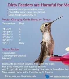 Easiest Nectar Recipe – no cooling time! Get ready for tiny sprites and vow to m… Easiest Nectar Recipe – no cooling time! Get ready for tiny sprites and vow to make your own nectar this year. Keep hummingbirds safe & healthy with fresh nectar! Hummingbird Garden, Hummingbird Feeder Recipe, Homemade Hummingbird Food, Hummingbird Flowers, Hummingbird Sugar Water, Recipe For Hummingbird Nectar, Hummingbird Meaning, Hummingbird Photos, Hummingbird Tattoo
