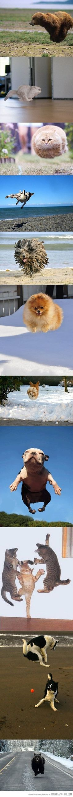 Hovering animals