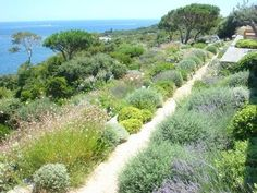 Image result for scrubland garden
