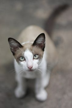 What a beautiful cat !  I love the eyes.