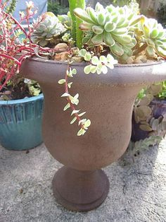 unique container gardening ideas 27