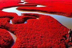 レッドビーチ 〜中国〜