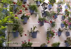 Imatges trobades pel Google de http://static.photaki.com/pared-decorada-con-macetas_54154.jpg