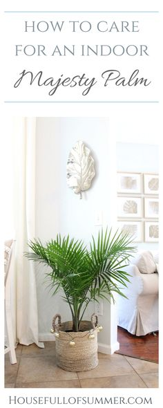 to Care for an Indoor Majesty Palm How to Care for an Indoor Majesty Palm House Full of Summer Coastal Home Lifestyle Florida home plant care palm trees indoors growin. Palm Trees Garden, Indoor Palm Trees, Tropical House Plants, Indoor Palms, House Plants Decor, Tropical Houses, Plants Indoor, Indoor Gardening, Gardening Tips