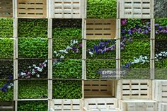 Vertical garden made with wooden boxes in patio of house in the city of Girona. Wooden Boxes, Nyc, Outdoor Structures, Patio, City, Garden, House, Wood Crates, Yard
