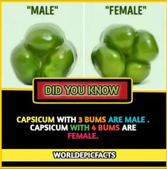 Wow Facts, Real Facts, Wtf Fun Facts, Funny Facts, Amazing Science Facts, Some Amazing Facts, Unbelievable Facts, True Interesting Facts, Interesting Facts About World