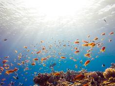 Tauchen im roten Meer Red Sea, Mammals, Underwater, Diving, Egypt, Travel, Painting, Fish, Club