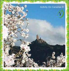 El almendro en flor en todo su ESPLENDOR. @desdetejeda. Feliz día. @_Canarias @Love_Canarias @EmocionesCan @tejedaGC