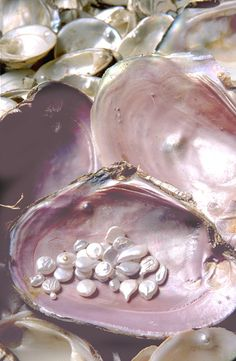 Beautiful irregularly shaped pearls in oyster. One of the reasons pearls are so unique compared to stone gems, they form so differently and uniquely from one another, like snowflakes and humans.