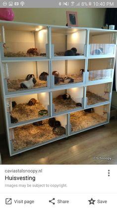 Big Bird Cage, Guniea Pig, Pet Guinea Pigs, Rabbit Cages, Pet Rats, Wedding Art, Cute Funny Animals, Exotic Pets, Farm Animals
