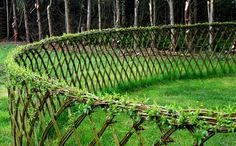 living willow lattice fence