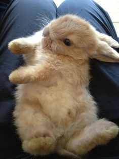 """""""You earned this fluff break."""" 