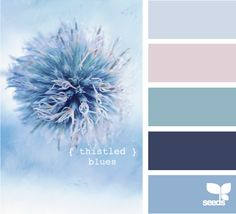 thistled blues