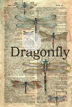 Dragonfly Mixed Media Drawing on Digitized Dictionary added to Old Parchment - flying shoes art studio