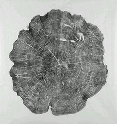 Ancient Tree Cookie