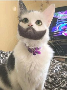 Unhypsignathe monstrueux Funny Animal Clips, Animal Memes, Baby Animals, Funny Animals, Cute Animals, Dog Rescue Shelters, Cute Cats, Funny Cats, Party Mottos