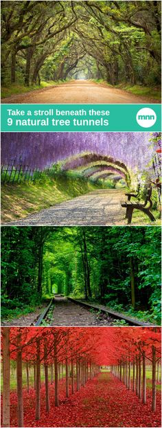 Tree tunnels: When paths and roads are carved into the ground, nearby trees bend outward into the new patch of light to receive more energy for photosynthesis.