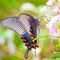Mariposas de colores con medias de nylon