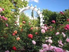Luther Burbank Gardens, Santa Rosa, Wine Country/Santa Rosa California