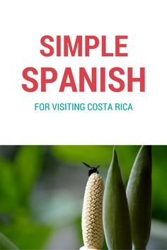 Most common words and phrases to get you ready for your trip to Costa Rica. Print out this list, and you'll be all set!