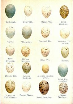 Egg identification chart. Very interesting