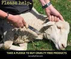 I pledge against #AnimalCruelty.  #CrueltyFree #animals #PETA #Isupportpeta