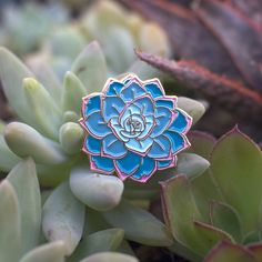 Cute little 1 inch echeveria succulent Enamel Pin complete with pink edges! Hand-drawn teacup packaging.