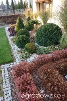 Ogród mały, ale pojemny;) - strona 55 - Forum ogrodnicze - Ogrodowisko