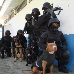 Swat Team with a k9 Pitbull Law Enforcement Today www.lawenforcementtoday.com