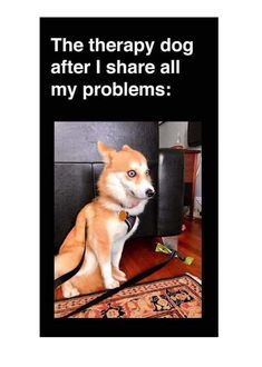 Animal memes are by far so hilarious that you would have to laugh even yo resist maximum. Here is the collection of 16 funniest animal memes and funny quotes that will make your day great. Memes Humor, Pet Memes, Funny Animal Memes, Stupid Funny Memes, Cute Funny Animals, Funny Relatable Memes, Funny Animal Pictures, 9gag Funny, Funny Cute