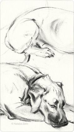 Rhodesian Ridgeback, Oscar, charcoal dog portrait - www.oscaratemymuffin.com