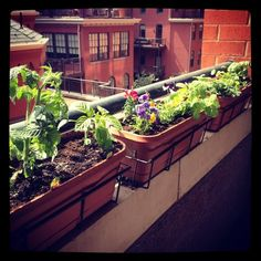 28 Best Apartment Herb Gardens images | Herb garden ...