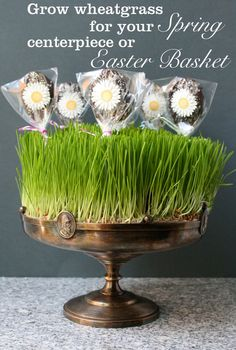 TEND wheatgrass centre piece for your Easter and Spring Table http://www.tendmagazine.co.uk/home/spring-project-grow-wheatgrass