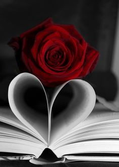 Love in the Pages by Denise Miller Photography Flower Background Wallpaper, Flower Phone Wallpaper, Red Wallpaper, Heart Wallpaper, Flower Backgrounds, Love Rose Flower, Beautiful Rose Flowers, Photo Pop Art, Book Flowers